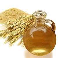 Масло зародышей пшеницы считается уникальным средством, сохраняющим здоровье и поддерживающим красоту