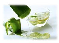 Сок и листья Алоэ очень успешно противостоят различным микробам, грибкам и некоторым вирусам.