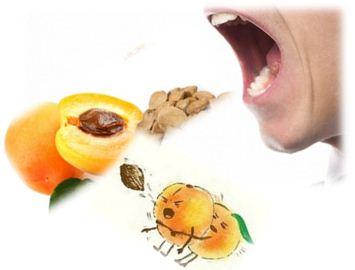 Косточки абрикоса могут вызвать тяжелое отравление, даже со смертельным исходом