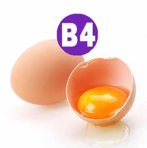 Витамин В4 — витаминоподобное вещество холин (выделили этот витамин из желчи), оказывает благотворительное воздействие на процессы белкового и жирового обмена, снижает уровень холестерина в крови, нормализует сердечный ритм и укрепляет сердечную мышцу, улучшает метаболизм в нервной ткани, предотвращает образование желчных камней