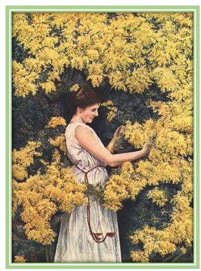 Невысокое дерево с сильно разветвленной кроной. Древесина твердая, темно-бурая, с более светлой заболонью. Листья дваждыперистосложные, с многочисленными мелкими листочками, с парными шипами при основании. Цветки желтые, собраны в колосовидные соцветия. Плод — боб, сплюснутый, односемянный, темно-бурый