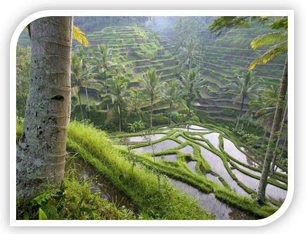 балийская древесина наполняет вас необыкновенным ощущением покоя, жизненной силы и энергией самой природы!