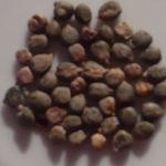 Благодаря своему многообразному составу медицинский препарат Бальзамин эффективно способствует заживлению ран и успокоению боли. Бальзамин положительно воздействует на мочевыделительную систему и почки