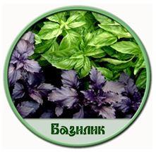 Благодаря своим противовоспалительным свойствам, базилик уменьшит воспаление и облегчит дыхание при астме