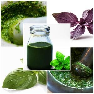 Благодаря антиоксидантным свойствам масла базилика его часто используют как компонент промышленной и домашней косметике.