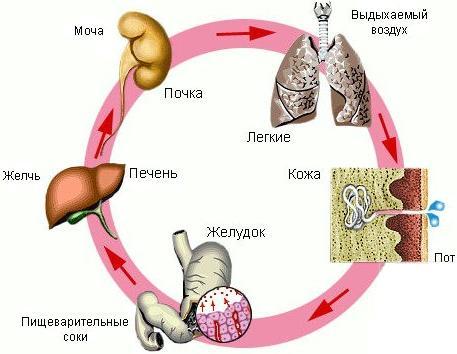 Если витамин В6 долгое время не поступает в наш организм, то происходит разрушение белкового обмена.