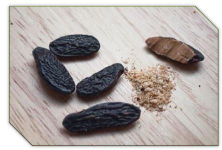Основное использование бобов тонка - приготовление ароматических тинктур для духов и ароматизации домашней косметики, например, крема для тела или массажных плиток