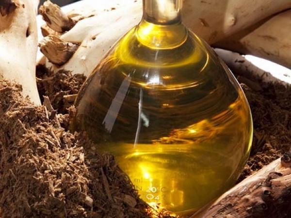 В парфюмерно-косметических приложениях масло сандалового дерева высоко ценится не только за экзотический, энергичный и одновременно успокаивающий аромат, но и как биологически активный компонент косметических средств. Его замечательные свойства давно и хорошо известны. Оно обладает выраженным успокаивающим и смягчающим эффектом при воспалительных и аллергических реакциях и раздражениях кожи, характеризуется антисептическим, бактерицидным и противогрибковым (антифунгицидным) действием, тонизирует, увлажняет и заживляет кожу, особенно эффективно в средствах для сухой, потрескавшейся и обезжиренной кожи и в препаратах для ухода за нежной кожей вокруг глаз, снимает утомление, эмоциональные перегрузки, повышает половую потенцию у мужчин, эффективно для профилактики воздействия на организм вредных химических факторов и радиационных воздействий. Немаловажный аспект при использовании масла сандала в косметических и парфюмерных рецептурах - его проверенная веками безопасность и отсутствие ограничений на его применение.