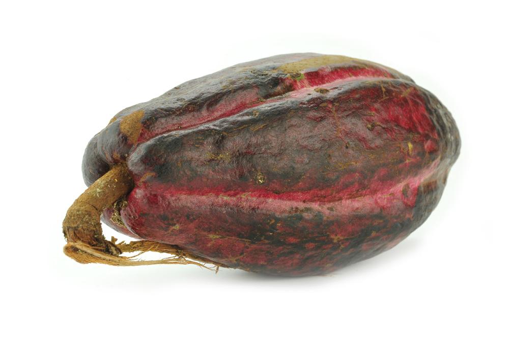 Какао в составе российской натуральной косметики МИРРА (MIRRA, Мирра-люкс)