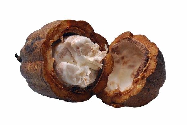 Масло какао – популярное высокоэффективное косметическое средство
