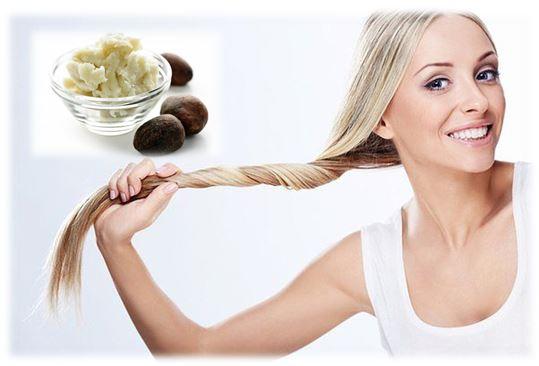 Африканское масло ши применяется также для ухода за волосами. Так как это масло является кладовой витаминов А, Е и F, оно отлично подходит для увлажнения сухих, ломких и секущихся волос. Многие женщины используют масло ши для волос, чтобы вернуть им жизненную силу, энергию, блеск, здоровье и красоту. Кислоты, содержащиеся в масле, помогают коже головы удерживать влагу, а благодаря своей консистенции масло ши отлично впитывается и не оставляет жирных следов