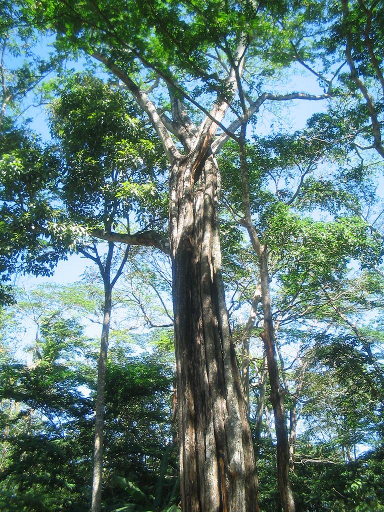 Толуанский бальзам (лат. Tolu Balsam, от названия города Толу (es:Tolú) в Колумбии; также встречается написание толутанский) — густая ароматическая жидкость, выделяющаяся из надрезов коры дерева Myraxylo (Toluifera) balsamum