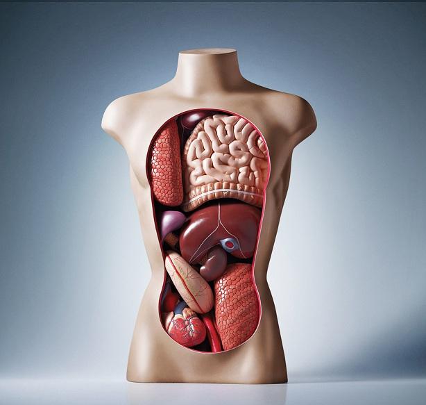 В косметологии дягиль применяется в составе антибактериальных и антиугревых комплексов