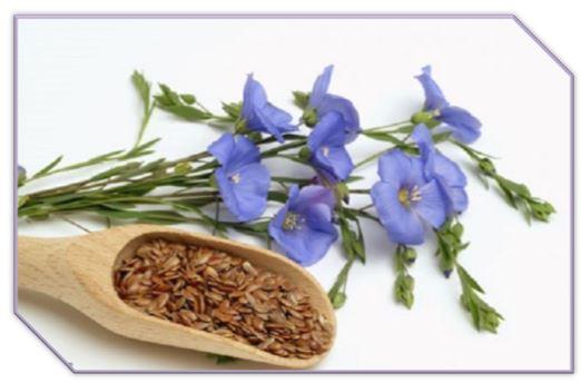 Семена льна богаты протеинами, жирами, клейковиной и диетической клетчаткой. Основными действующими веществами, содержащимися в семени льна, являются: протеины, полисахариды; растительные волокна (лигнаны)