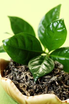 Зеленый чай в составе российской натуральной косметики МИРРА (MIRRA, Мирра-люкс)
