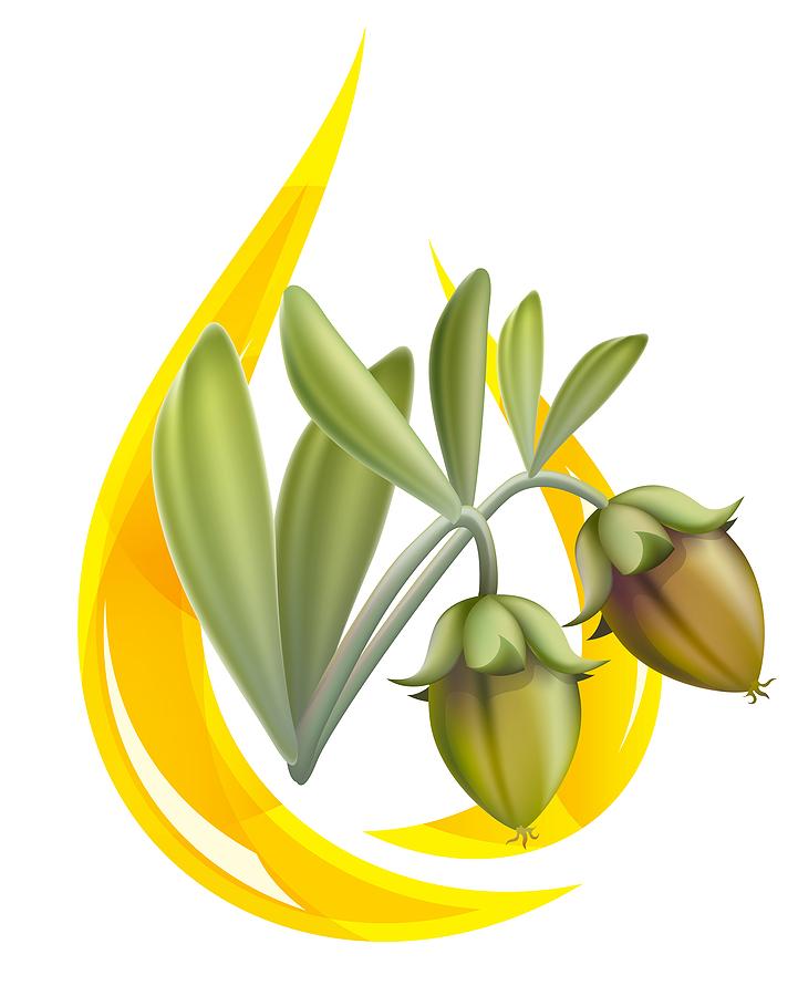 Масло жожоба обогащено протеинами и питательными веществами