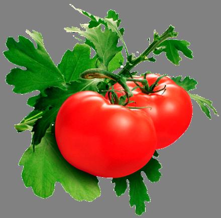 Ингредиенты МИРРА помидоры
