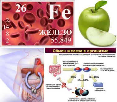 витаминный комплекс в составе препарата поддерживает обменные процессы и работу кроветворения в организме