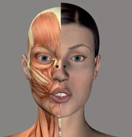 Образование мимических морщин - В результате постоянного сокращения мышц и мимики кожа постоянно растягивается