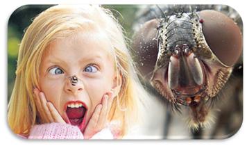 Репеллент – средство защиты от насекомых, которое обычно состоит из одного и более органических соединений